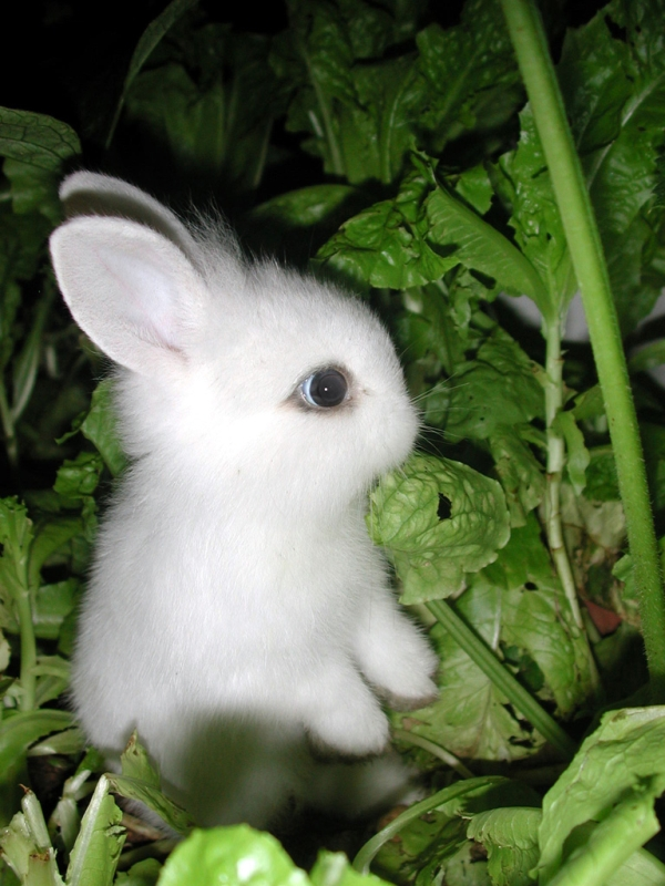 Playboy bunny Sheila Levell